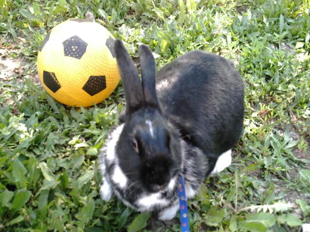 Diabolo jouant au foot